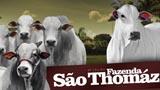 9º LeilãoFazenda São Thomáz