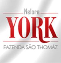 Nelore York