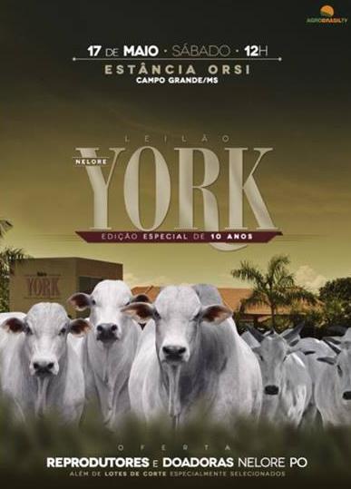 Leilão Nelore York
